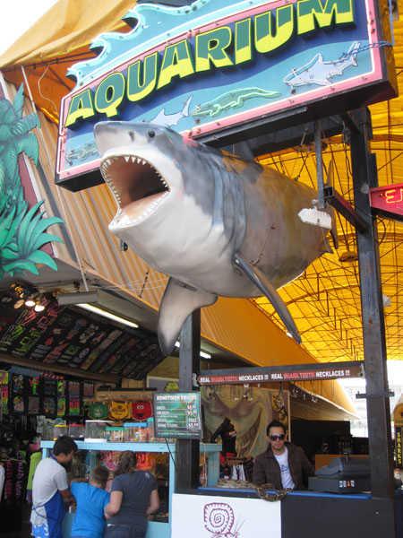 seaport aquarium wildwood rentals